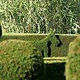 Topiary_donkey_topiaire_ane
