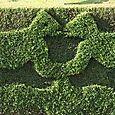 Topiary_kiss_topiaire_baiser