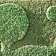 Topiary_sun_topiaire_soleil