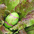 Easter_egg_oeuf_de_paques