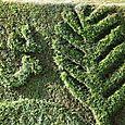 Topiary_bird_topiaire_oiseau