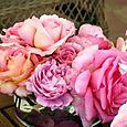 Tea_th_rose