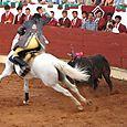 Rui_salvador_cheval_athlte