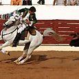 Tito_semedo_statue_equestre