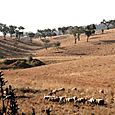 Sheep_mouton_ovelhas