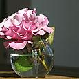 Rose_dioressence