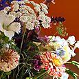 Bouquet_zinnia_peppermint