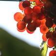 Grapes_fragole_raisin_uva
