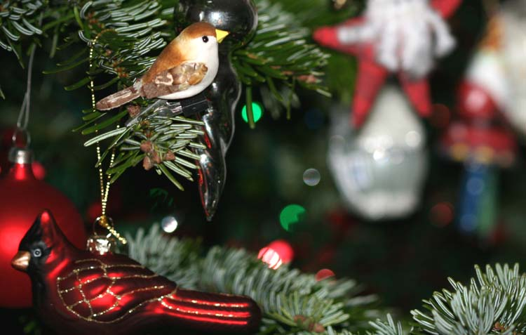 Chritmas bird oiseau Noel