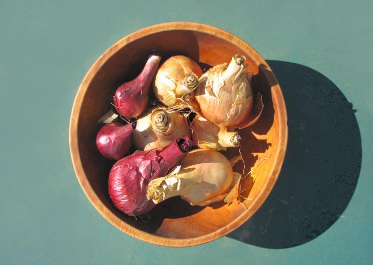 Onion oignons Cebola