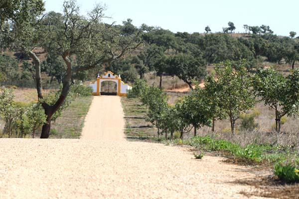 Route LOF carob caroubiers
