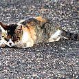 Sliping ca chat qui dort