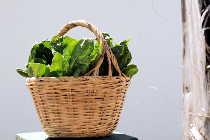 Spinach épinards espinafre