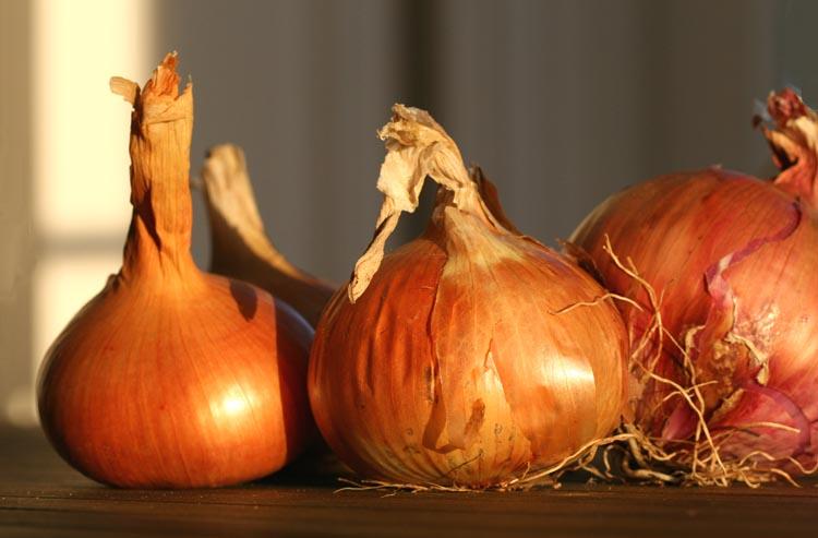 Onions oignons cebola
