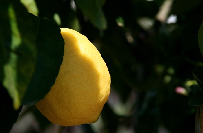 Lemon citron limao  fino