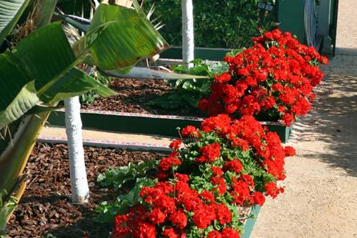Jardin rouge LOF 2009