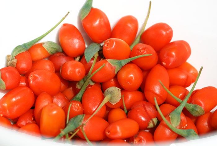 Wolfberry goji Lycium barbarum