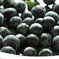 Blueberries bleuets myrtille mirtilo
