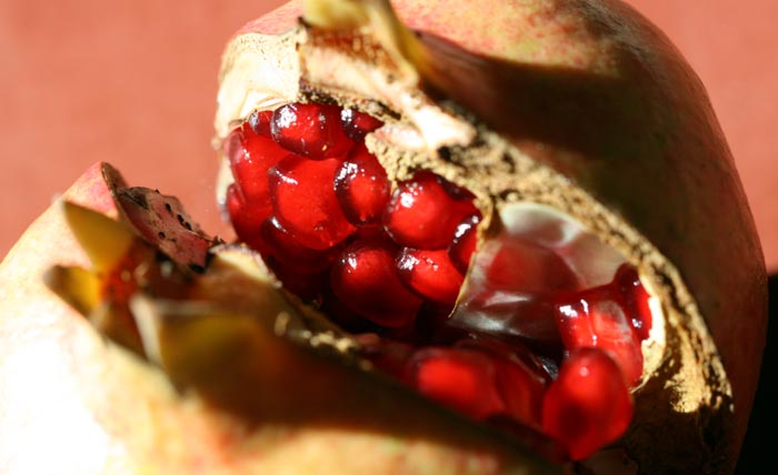Pomegranate grenade Punica granatum