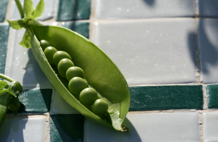 Peas petits pois ervilhas