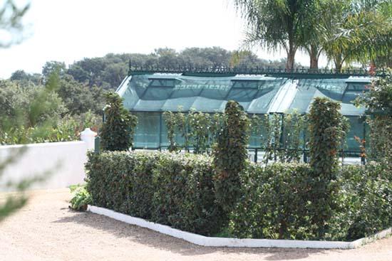 Jardin Ann aromatiques haie pitangas LOF 2009 10