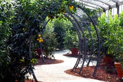Pescia hespéridarium il giardino degli agrumi