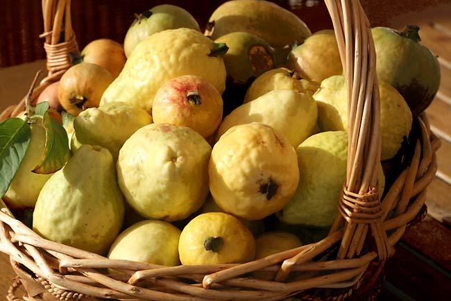 Guava guaba goava goayve