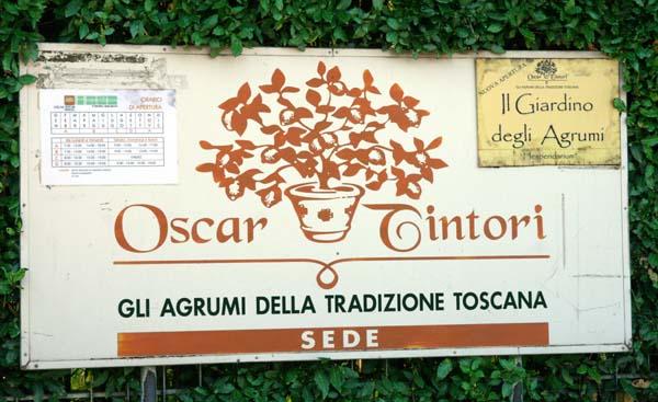 Oscar Tintori Pescia