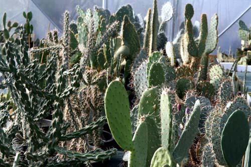 Cactus chez Palmaris