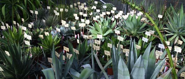 Plants labels étiquetage plantes