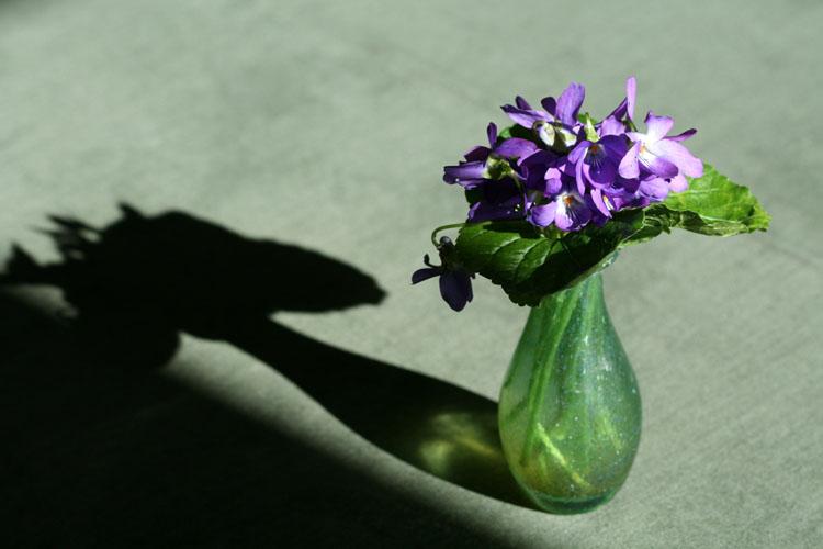 Violets voilettes