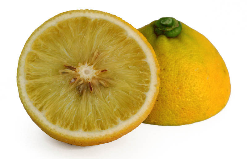 ベルガモット bergamot bergamotto