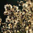 11月 flor di campo