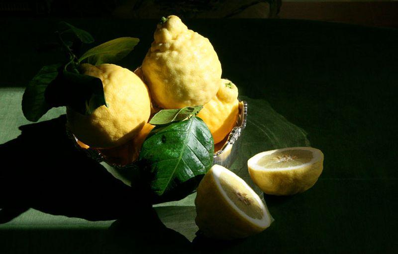 Citrus limon 'Ponderosa' Giant American Lemon