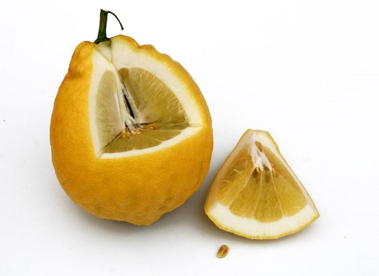 Ponderos lemon American wonder