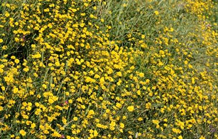 Chrysanthèmes de Mykonos carpet tapis