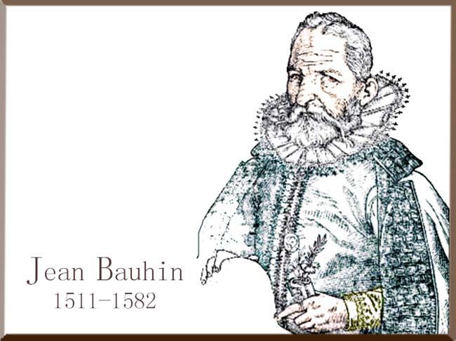 Jean Bauhin 1511-1582