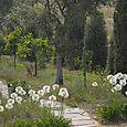 Path chemin Béatrice Pichon