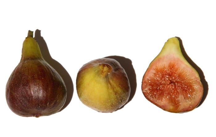 Early-ripe fig figue fleur breba hocory fioroni fichi fioroni