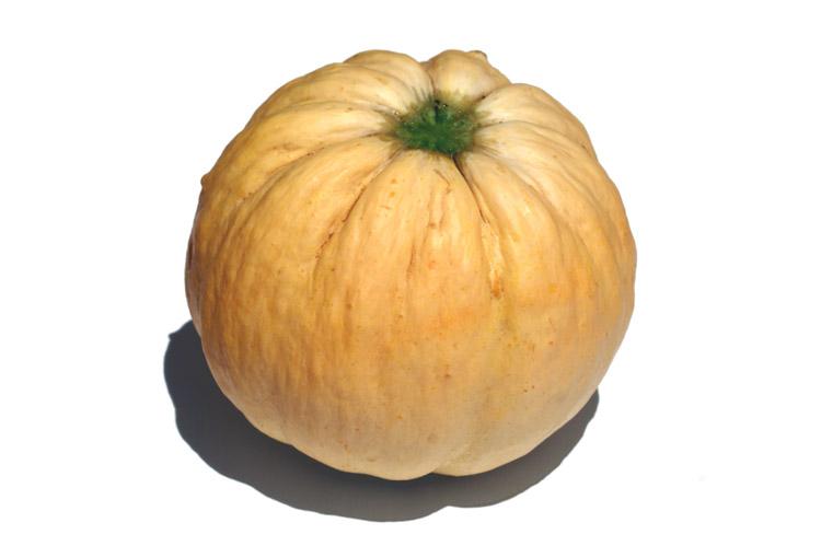 Melone Zatta melao melon