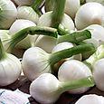 White onion بصل cipolla bianca