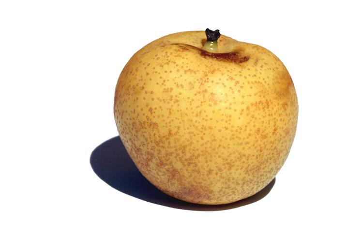 Nashi pear ナシ