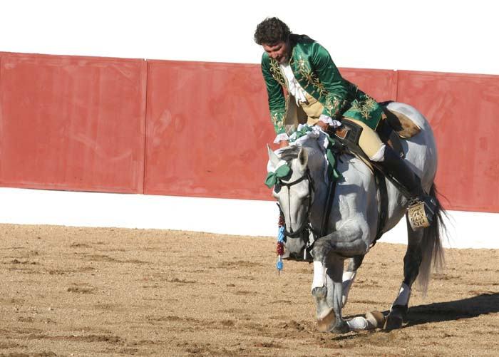 Tito Semedo cheval  a genou