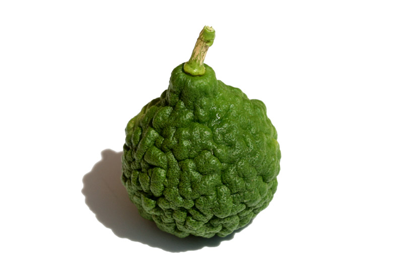 Citrus hystrics combava combawa cumbaba makrut ou kaffir lime