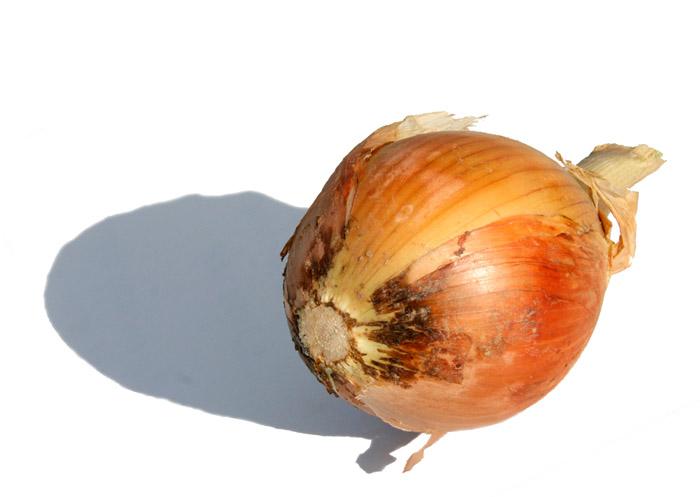 Onion oignon  cenoura タマネギ  cipolla
