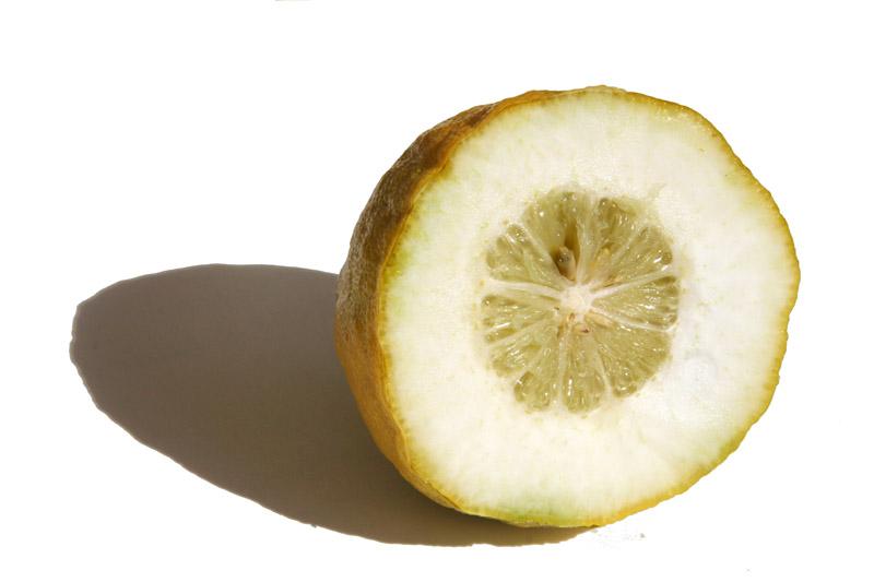 Etrog Citron  Cédrat   Cedro   أترج  - シトロン