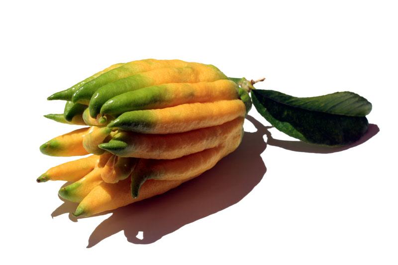 Buddha's Hand citron