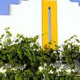 Grapes vigne Béatrice Pichon