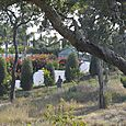 Jean Paul Brigand dans son jardin Béatrice Pichon