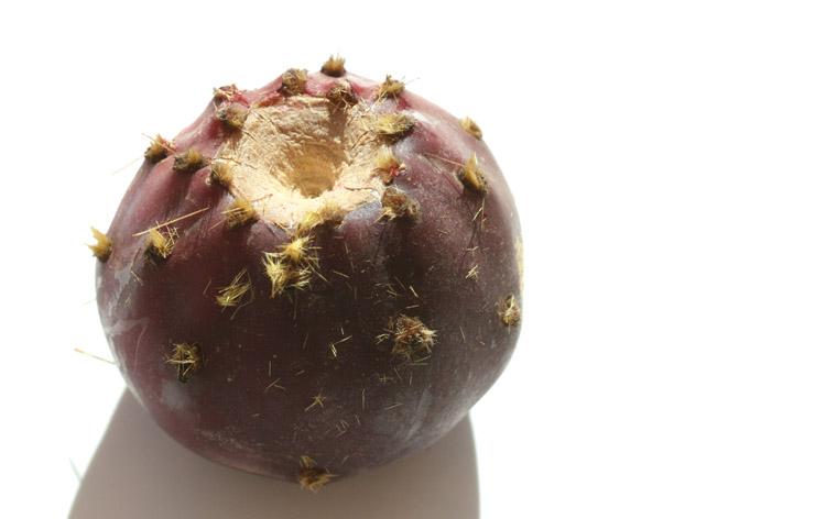Opuntia robusta purple  pourpre violet